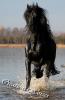 Horses-Creations