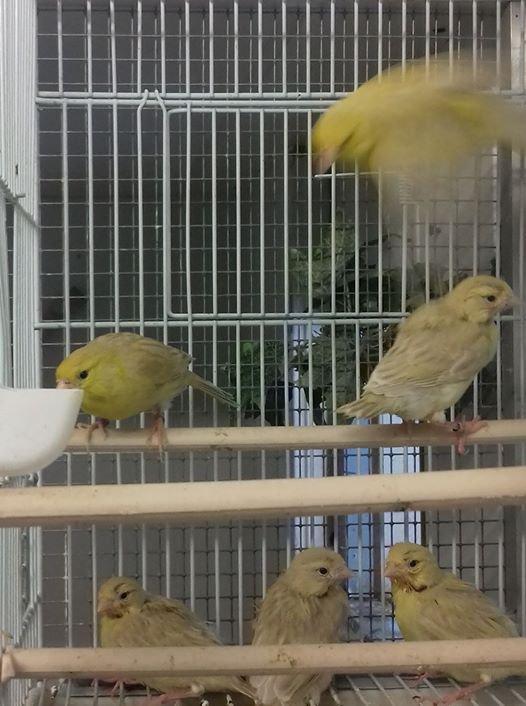 petite photo de famille isabelle jaune