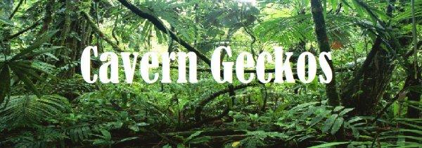 Petit site crée pour mes geckos