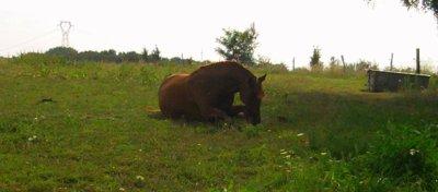 Avec de la patience et de la confiance, on arrive a tout avec un cheval ♥