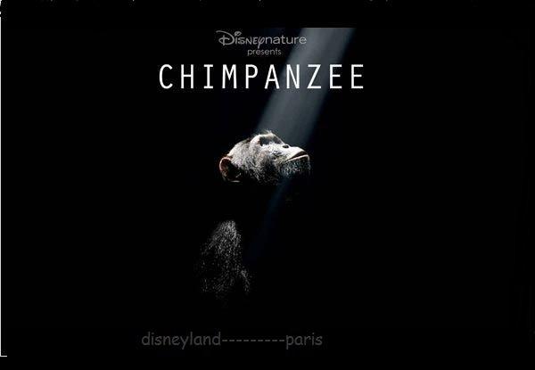 """""""Chimpanzés"""": Le nouveau DisneyNature prochainnement au cinema..."""