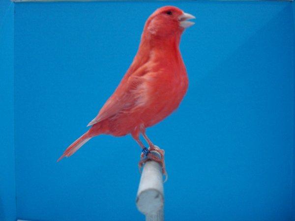 λιποχρωμικο κοκκινο εντονο 2011