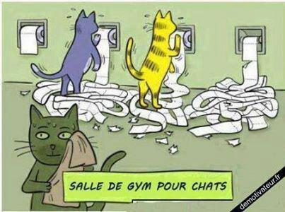 Chats alors