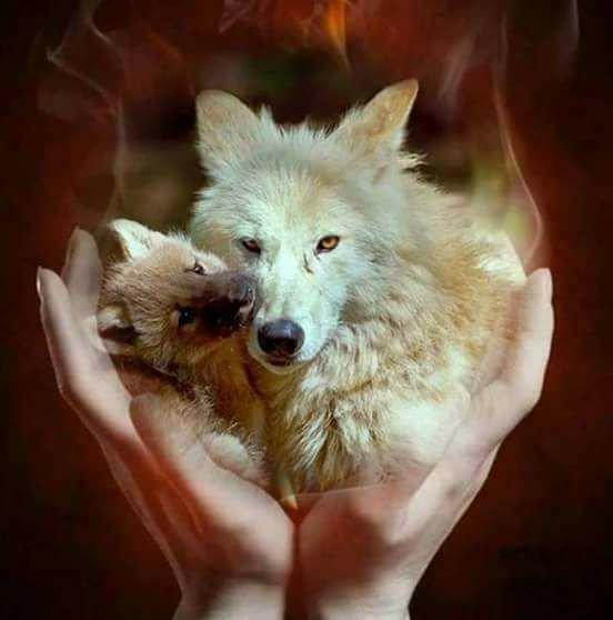 (l) loup (l)