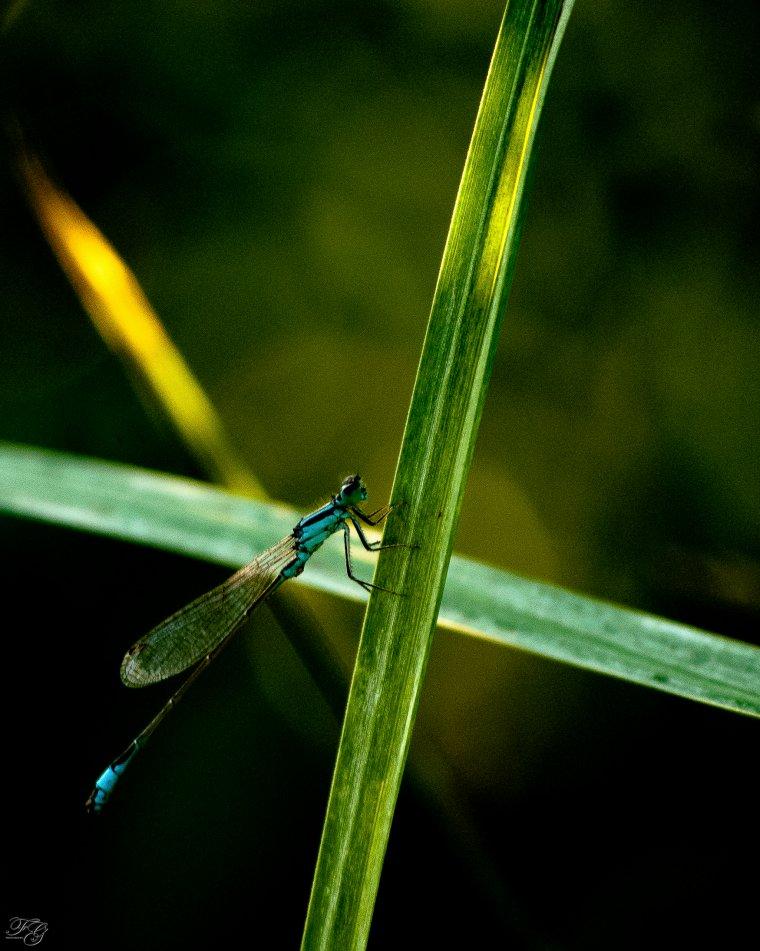 Chenille, libellule, papillon