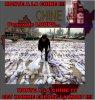Chine : Des peaux de loups sur le marché