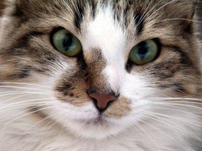 Italie : 7000 chats sont mangés chaque année.