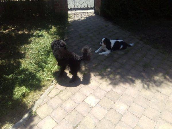 976. Frimousse et Lucky revoient leur nounou