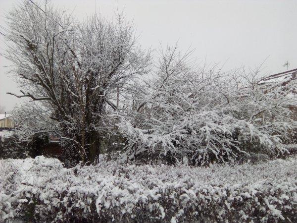 1266. La neige en a remis une couche (1)