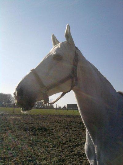 Mon namour de petit cheval