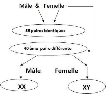 Génétique:simple rappel