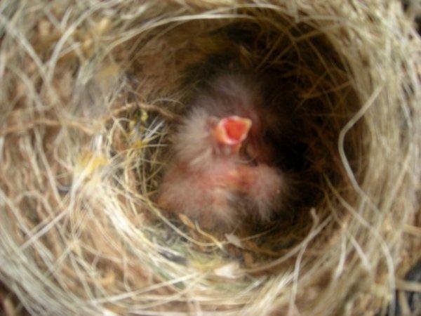 Première naissance 2012