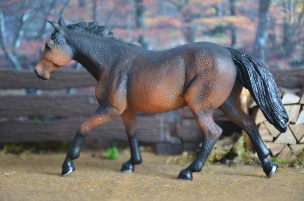 étalon quarter horse Mojö Fun
