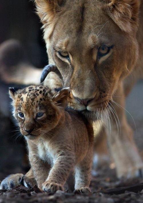 Le plus grand amour est l'amour d'une mère, vient ensuite l'amour d'un chien, puis l'amour d'un amant.