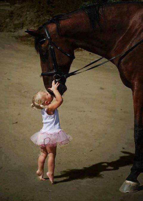 les chevaux nous donnent un sens du bien-être émotionnel grâce à l'amour inconditionnel qu'ils nous portent.