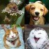 Le sourire des animaux