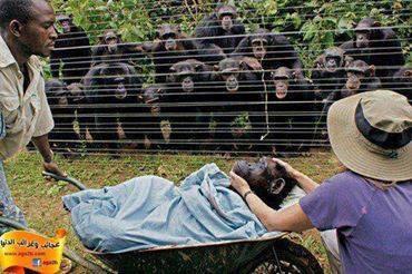 même les animaux s'inquiètent pour la santé de leurs amis