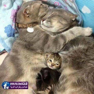 La famille joyeuse