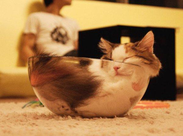 C est chat !!