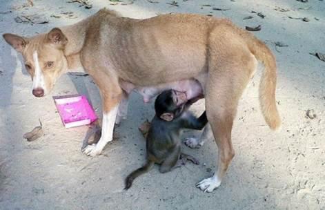 L heure du biberon : le chien et le singe