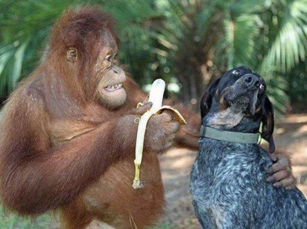 Histoire naturelle : banane lite