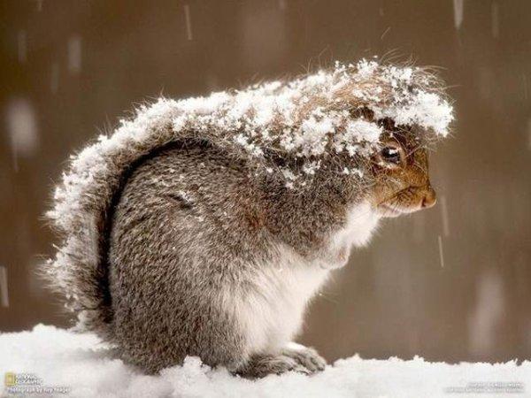 Histoire naturelle : Ecureuil d hiver