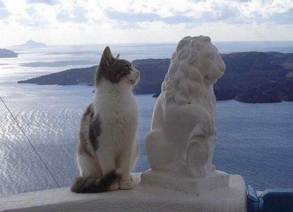 Histoire naturelle : chat copieur