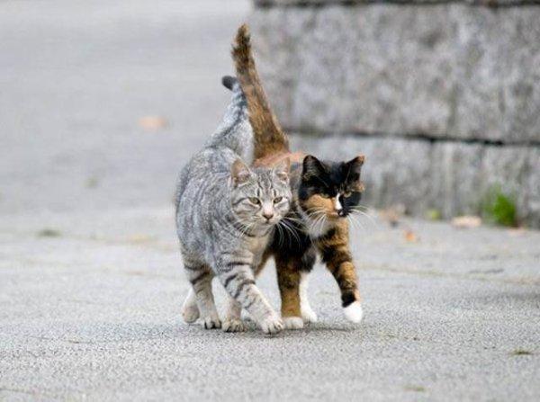 Histoire naturelle : les 2 chats