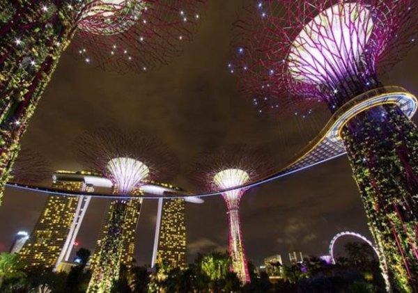 Beauté du monde : Les super arbres de Singapour