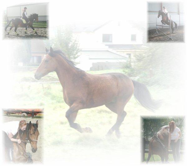 Demande moi de choisir entre toi et mon cheval , et tu me perdra.