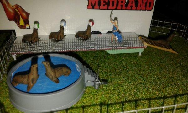 Vi piace la nuova piscina per le OTARIE?