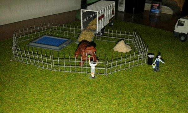 ....e del recinto dell'ippopotamo Pippo e della sua vasca?