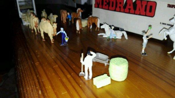 Ci si occupa dei cammelli e dei dromedari.