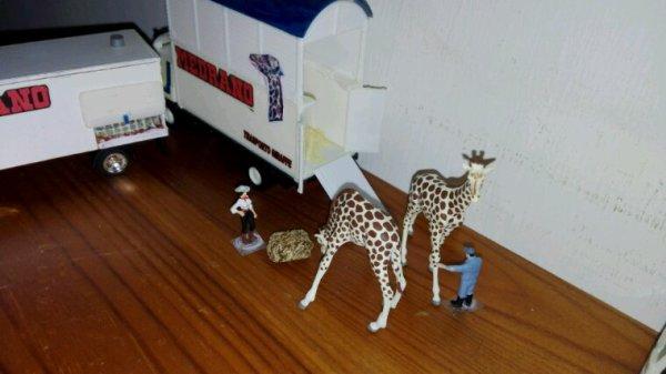 Le nostre due magnifiche giraffe.