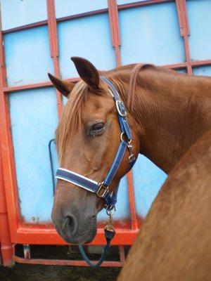 ...♥...L'extérieur du cheval exerce une influence bénéfique sur l'intérieur de l'homme  ...♥...
