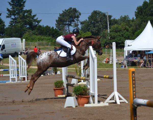 Le cheval, suspendu dans les airs, retombe au pas suivant, sur terre.