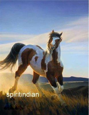 AppaloosasL'histoire du cheval amérindien