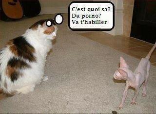 Humour animal