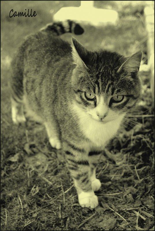 Si l'on pouvait croiser l'homme et le chat, ça améliorerait l'homme, mais ça dégraderait le chat ♥