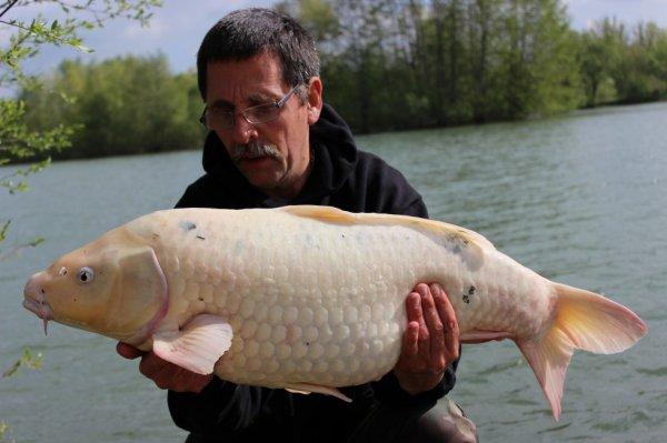 koi blanche de 11kgs800