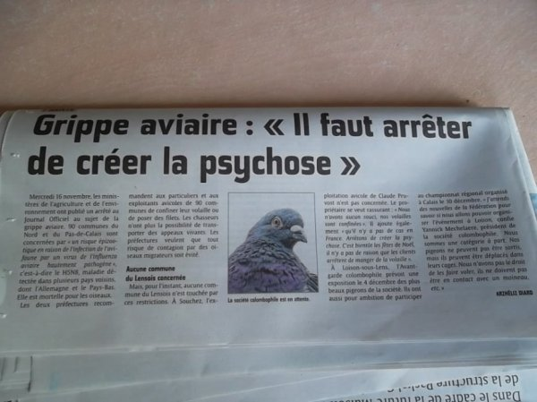 Grippe aviaire.