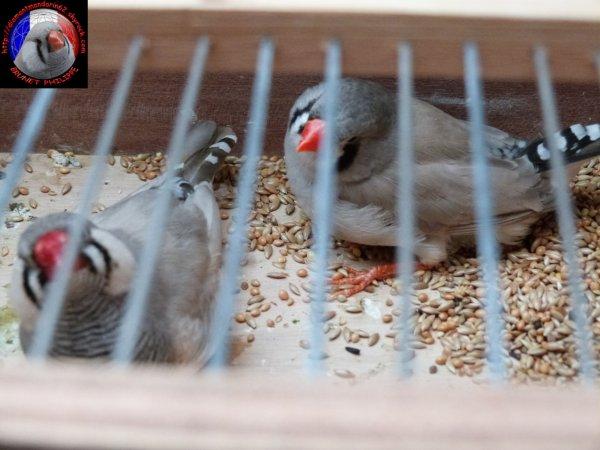 oiseaux de bourse.
