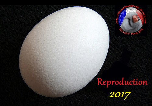 Reproduction 2017.