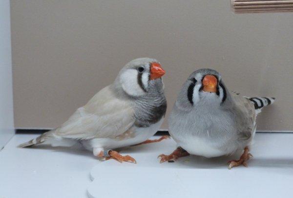 Liste des oiseaux à vendre.
