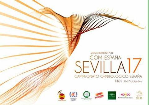 National Espagnol 2017
