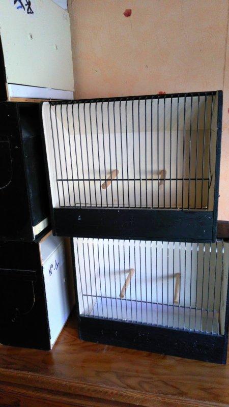 Cage concours à vendre.