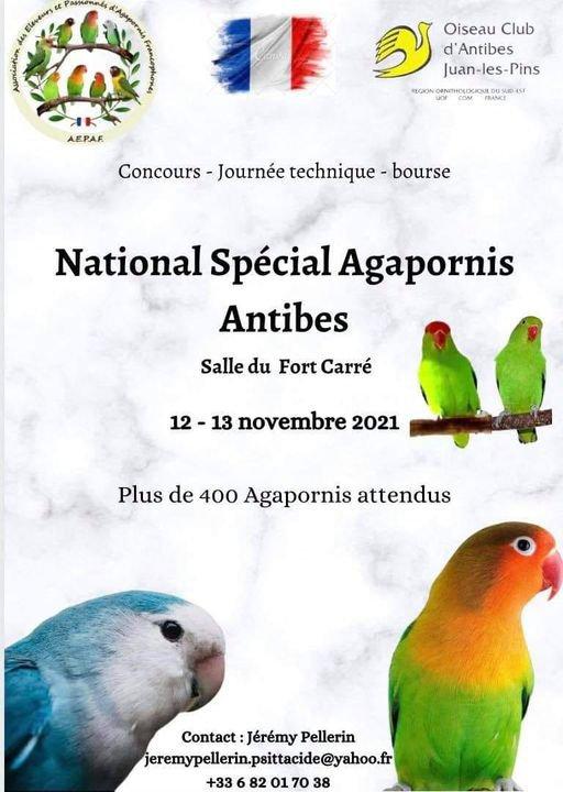 National UOF Agapornis.