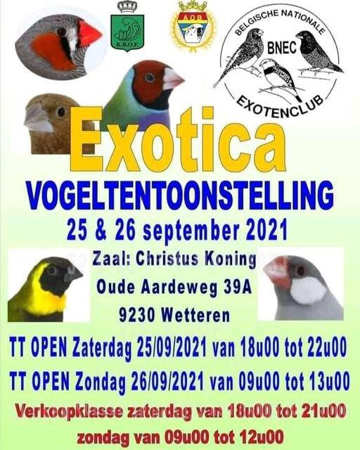 Spécial exotique en Belgique.