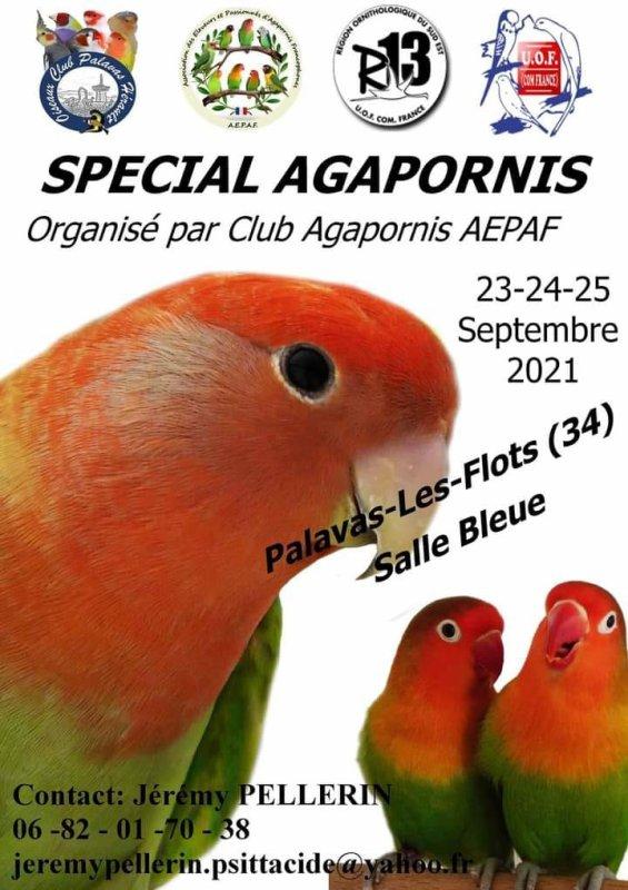 Special Agapornis.