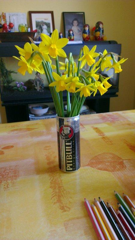 Pitbull energy drink sa sert aussi a sa un vase pour jonquilles